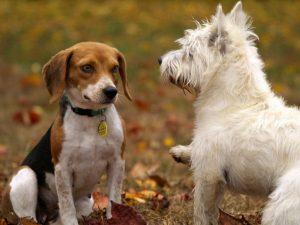 Mensch-Hund Beziehung - Mensch führt Hund @ Heidi's Zauberpark